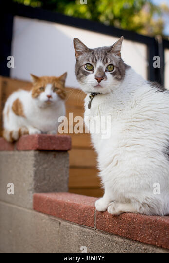 Zwei Katzen sitzen auf einem gemauerten Wand in eine Nachbarschaft-Einstellung mit einem Blick aus und das andere Stockbild