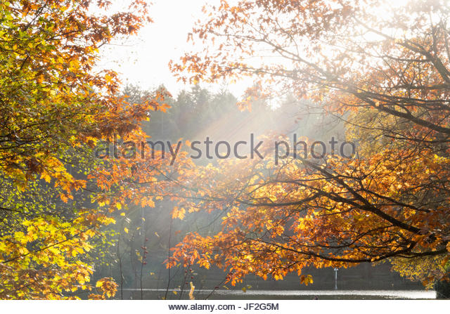 Sonne durch Zweige der Herbst Baum am See Stockbild