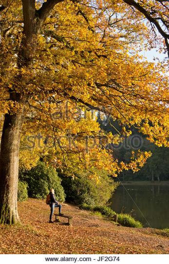Reife Frauen Wanderer stehen im Herbst Bäume und See Stockbild