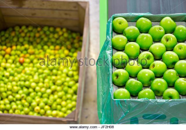 Verpackt in Kisten im Verarbeitungsbetrieb Obst Äpfel Stockbild