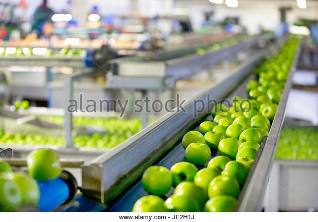 Äpfel In Obst und-Verpackung Pflanze eingestuft werden Stockbild