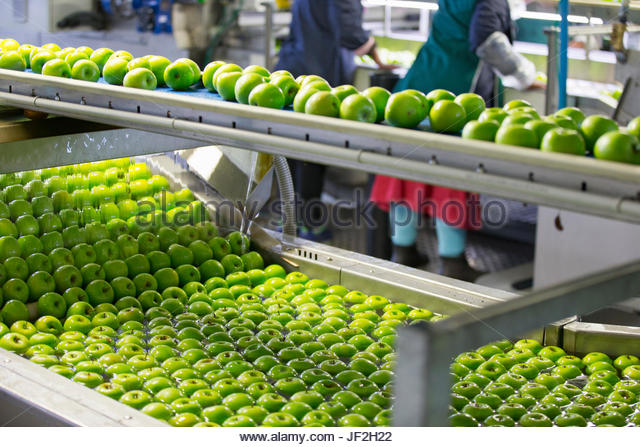 Äpfel werden gewaschen und In Frucht-Aufbereitungsanlage abgestuft Stockbild