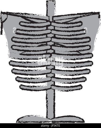 scapula and bone stockfotos scapula and bone bilder alamy. Black Bedroom Furniture Sets. Home Design Ideas