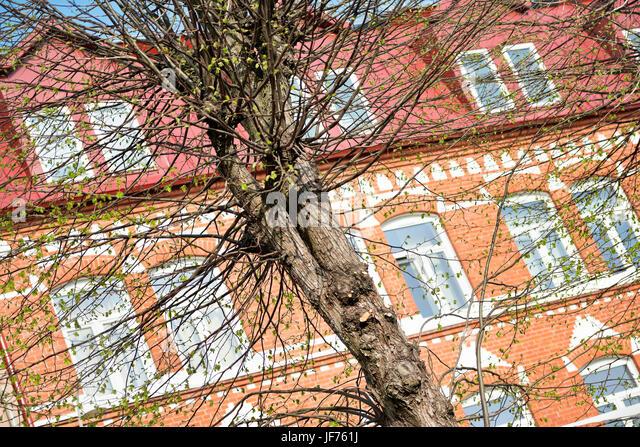 Frühling Baum vor Backsteingebäude Stockbild