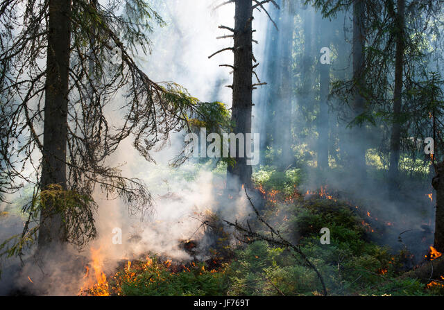 Brennenden Wald mit Rauch Stockbild