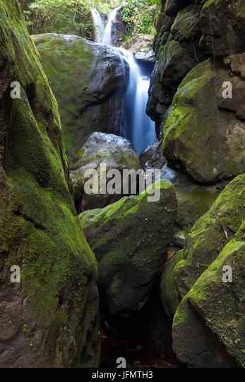Grünes Moos auf großen Felsbrocken am Chorros Las Yayas Wasserfälle, Cocle Provinz, Republik von Stockbild