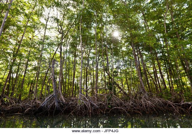Mangrovenwald am Coilba Insel Nationalpark, Pazifik, Veraguas Provinz, Republik von Panama. Stockbild