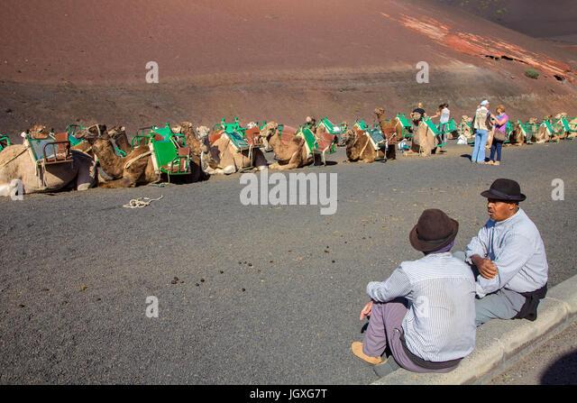 Kamelfuehrer und Dromedare rasten, einhoeckriges Kamel (camelus dromedarius) im Nationalpark Timanfaya, Lanzarote, Stockbild