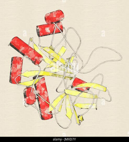 Thrombin Blutgerinnung Enzym (Rind). Wichtigen Protein im Blut Koagulation Kaskade. Lösliches Fibrinogen umwandelt Stockbild