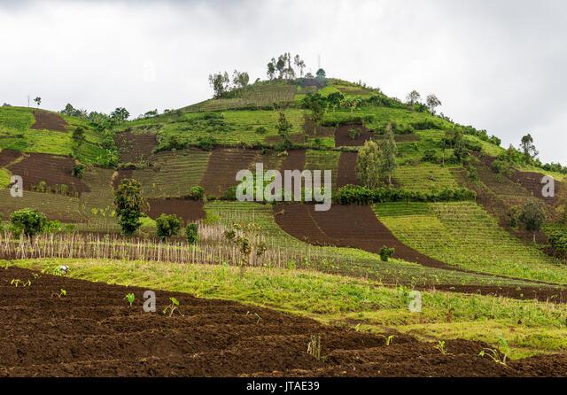 Ackerland in der Virunga National Park in der Demokratischen Republik Kongo, Afrika Stockbild