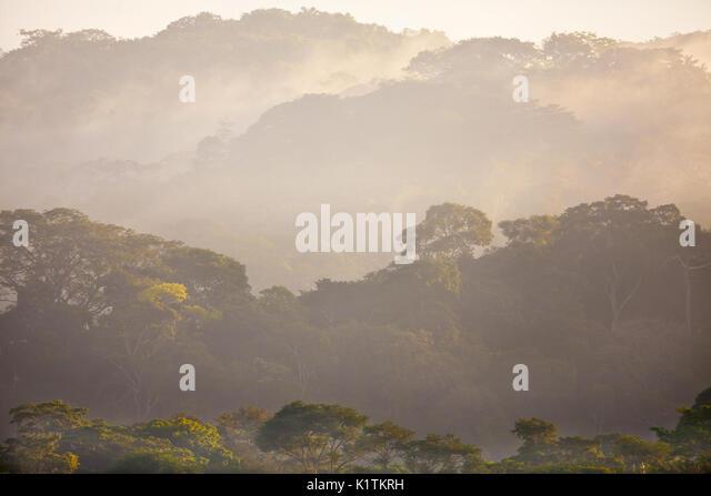 Feuchten Regenwald bei Sonnenaufgang in Soberania Nationalpark, Republik Panama. Stockbild