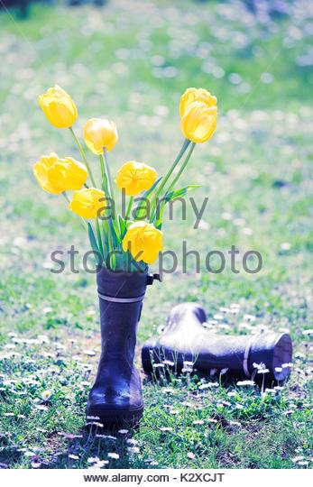 Blumen in den Galoschen Stockbild