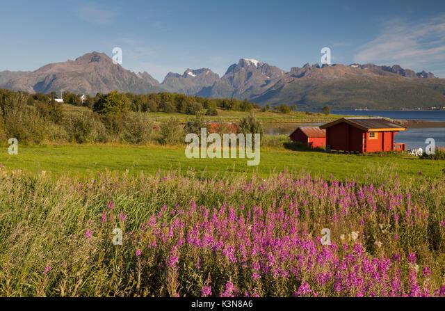 Senja Halbinsel, Norwegen. Ein typisch norwegischen Roten Haus mit den Lofoten Inseln im Hintergrund. Stockbild