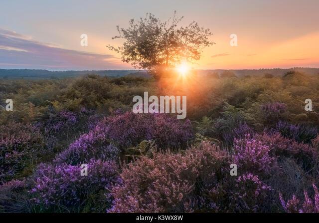 Bratley Ansicht, New Forest, Hampshire, England, Vereinigtes Königreich Stockbild