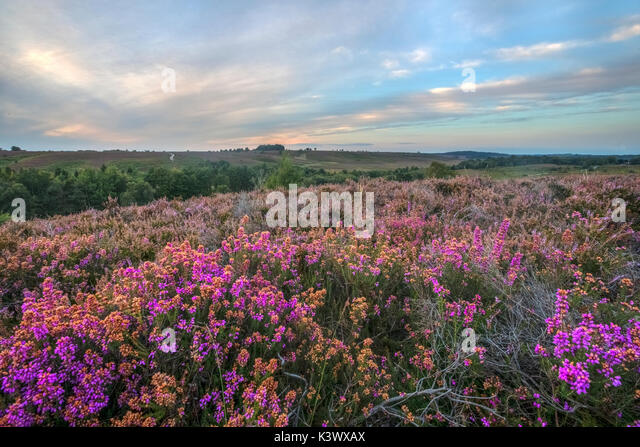 Rockford Gemeinsame; Linwood; Neue Wald; Hamsphire; England; UK Stockbild