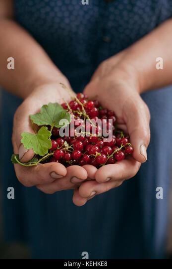 Hände halten roten Beeren Stockbild