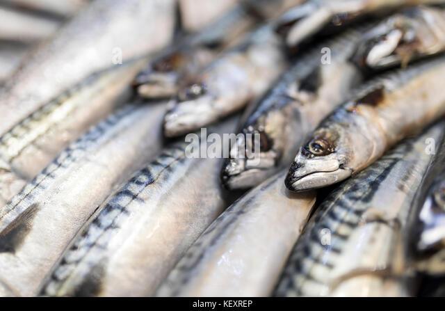 Eine Nahaufnahme von frisch gefangenen Makrelen auf Eis auf einem Markt, der in England, Großbritannien Stockbild