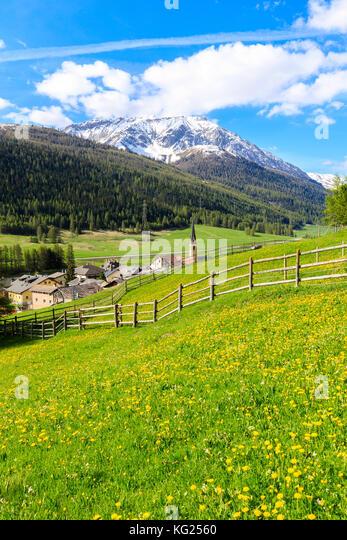 Alpine Dorf S-chanf von grünen Wiesen im Frühjahr umgeben, Kanton Graubünden, Maloja Region, Schweiz, Stockbild