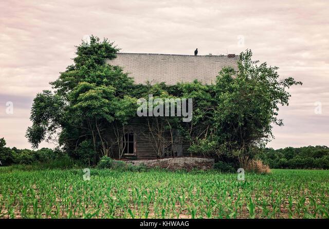 Juli 3, 2016 - Berlin, Maryland, USA - ein Raubvogel sitzt auf einem verlassenen Bauernhof Haus unter einem ominösen Stockbild
