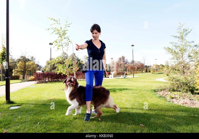 Dog Training Professional Handler Stockbild