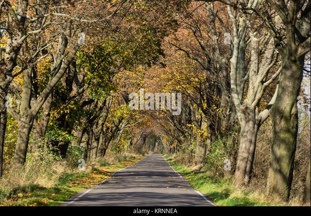 Allee im Herbst,, Land Brandenburg, Deutschland Stockbild