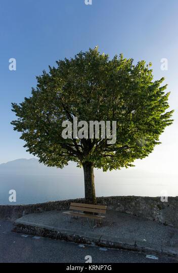 Baum, Puidoux, Lavaux, den Genfer See, die Schweizer Alpen, Schweiz Stockbild
