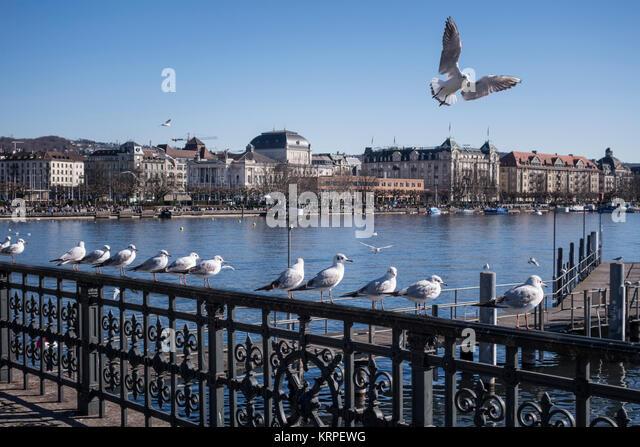 Buerkli Square Pier der Züricher See, Möwen in einer rohen, Zürich, Schweiz sitzen Stockbild