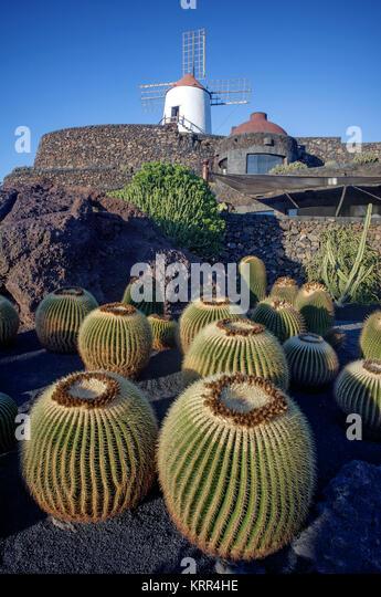 Jardin de Cactus, Windmühle, Lanzarote, Kanarische Inseln, Spanien Stockbild