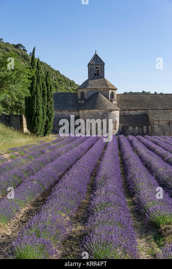 Abtei Notre-Dame von Senanque, Gordes, Provence-Alpes-Cote d'Azur, Frankreich Stockbild