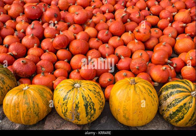 Pumkins, Herbst, Klaistow, Land Brandenburg, Deutschland Stockbild