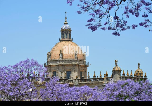 Spanien, Andalusien, Jerez de la Frontera, Jacaranda und Catedral Stockbild