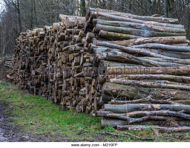 West Sussex England Holzstapel Stockbild