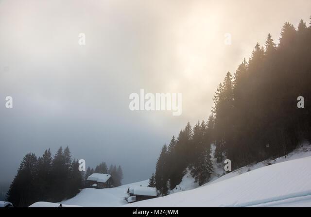 Schnee und den dunklen Wald, in den Bergen Stockbild