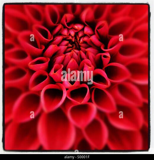 Nahaufnahme von roten Blume Stockbild