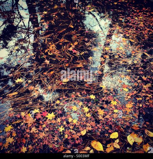 Gefallene Herbstlaub in einem Teich, Tokyo, Japan Stockbild