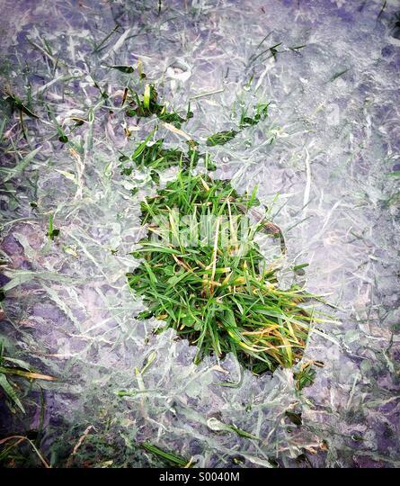 Umliegenden Grasbüschel Eis Stockbild