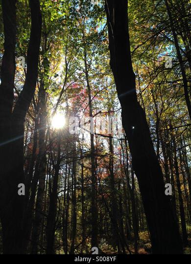 In den Wäldern von Maine. Stockbild