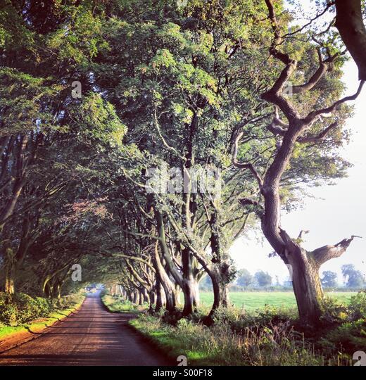 Schöne Allee von alten Bäumen Form Avenue in Wiltshire, England. Stockbild