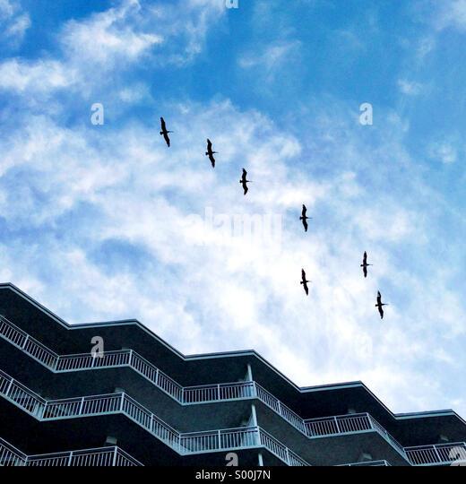 Vögel fliegen über ein Condo-Gebäude. Stockbild