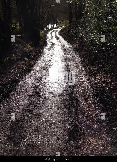 Nassen Waldweg durch Sonnenlicht gefangen Stockbild