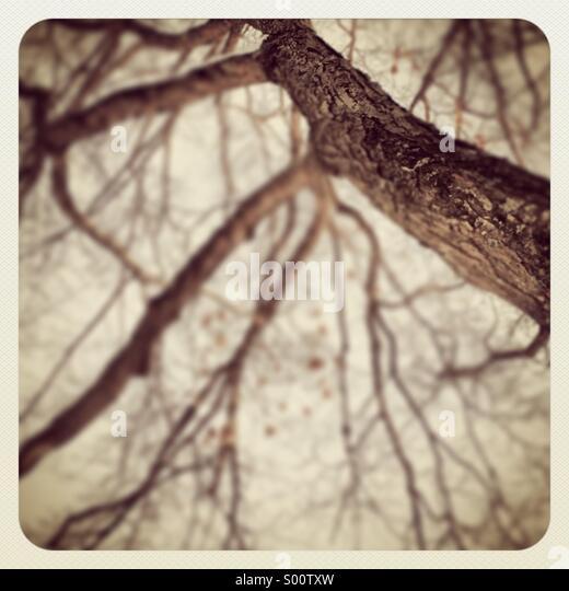 Baum und weiße Winterhimmel Stockbild
