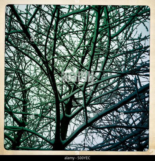 Schnee in Baum Stockbild