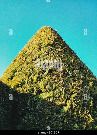 Ein Formschnitt-förmige Konifere ähnelt einen grünen Berg in Exmouth, Devon, UK. Stockbild