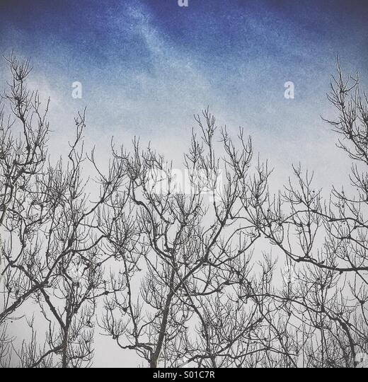 Lassen Sie weniger Winter Baum Stockbild