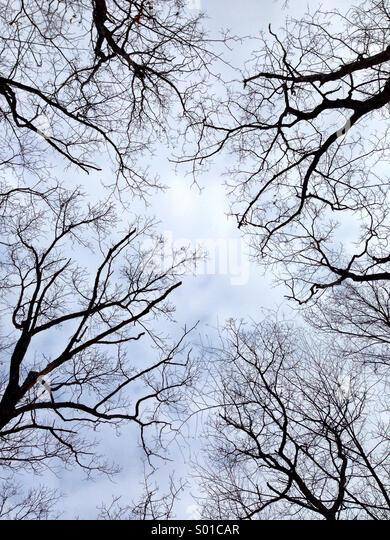 Nach oben auf Baumkronen. Stockbild