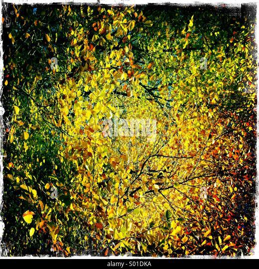 Goldene Herbstfärbung Stockbild