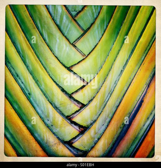 Abstrakte farbenfrohe Details eine ornamentale Palme. Stockbild