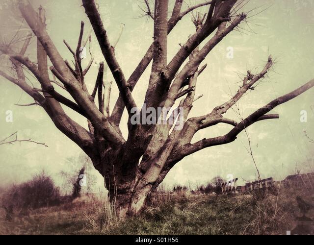Schauriger Baum Stockbild