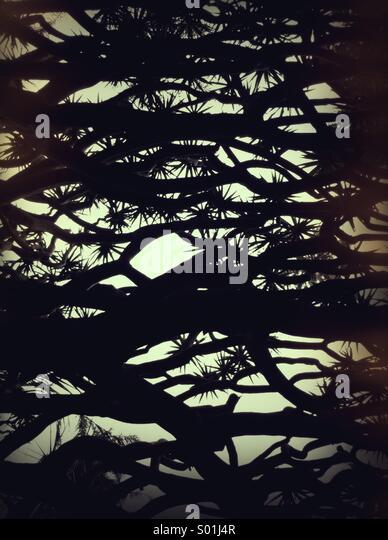 Baum-abstrakt Stockbild