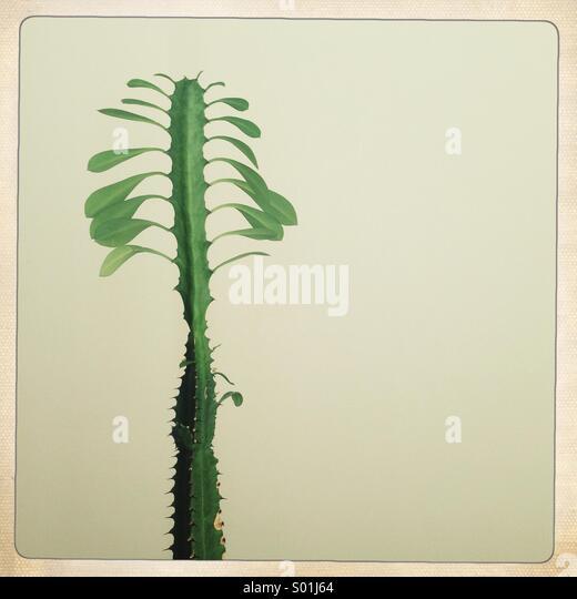 Kaktus lässt zu Hause Stockbild